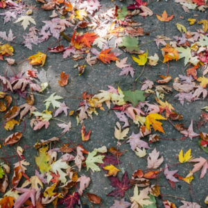 Tendenze di ottobre: la palette per l'autunno